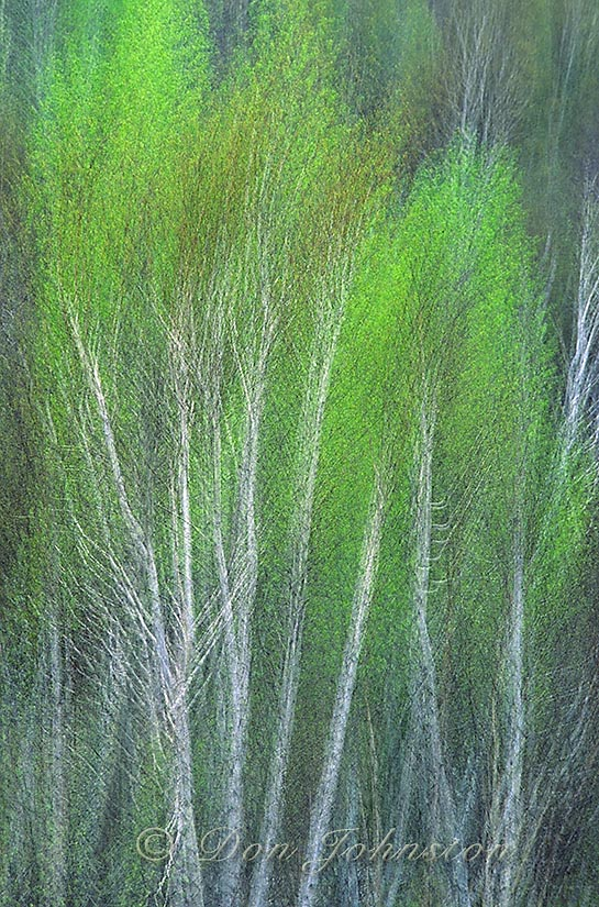 Spring Forest, multiple exposure