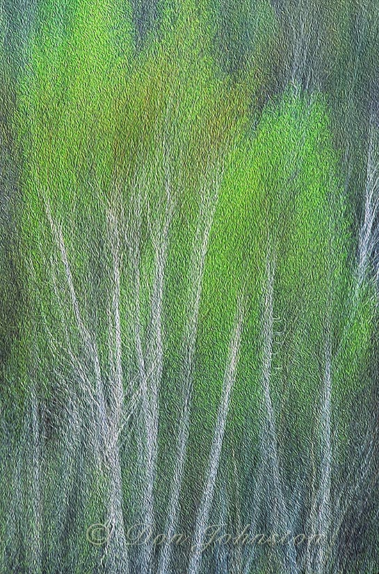 Spring Forest, multiple exposure, Oil Paint Filter