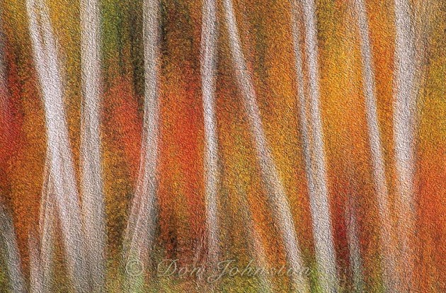 Autumn forest, multiple exposure, Oil Paint filter