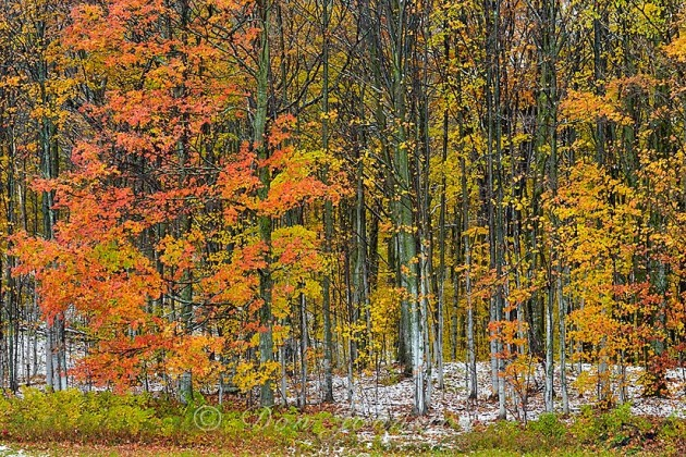 Late autumn colour and early snow in Michigan