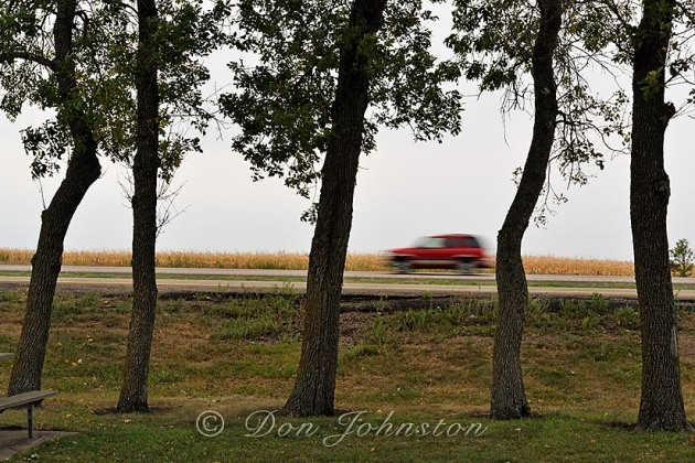 While we had lunch I tried to time the passing vehicles travelling in the opposite direction, between the oak trees
