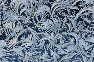 Garage window frost feathers. Spruce woodland background.