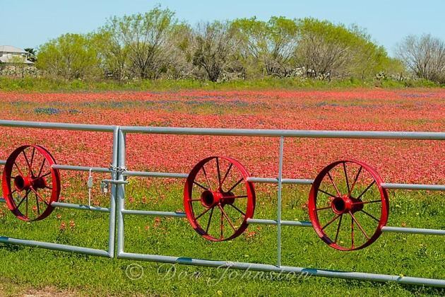 Ranch fence and Texas paintbrush