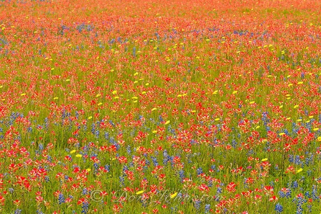 Diverse patches of clourful flowers