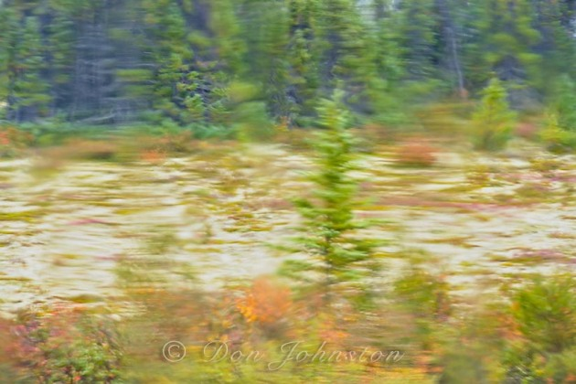 Subarctic taiga as seen through rain-soaked window. ⅛ @ f16 ISO 1600