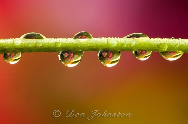 Raindrops cling to a garden flower stem.