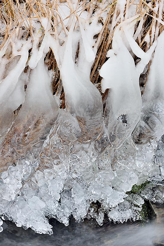 Ice coated grasses on the banks of a small stream