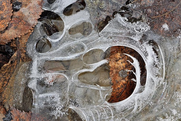 Trapped leaves and grasses in an ice-covered puddle