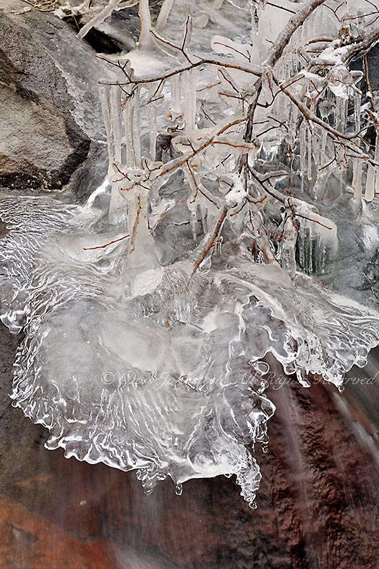 Ice build-up around a birch tree branch
