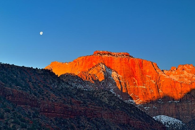Alpenglow in Zion Canyon-Towers of the Virgin, Zion National Park, Utah, USA