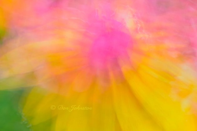 Macro lens painting in a flower garden. 5 seconds @ f18, 105 mm