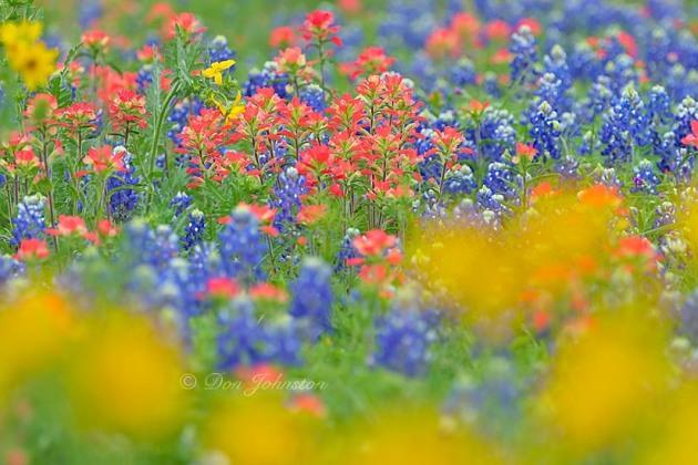 Texas wildflowers, 80-400 @ 280 mm f8.