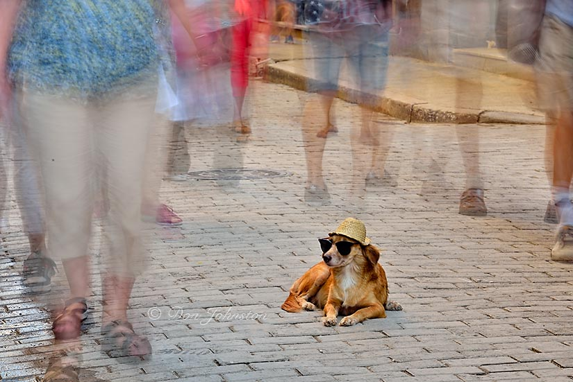Trained dog on the Obispo promenade with passersby. 1.6 s@f22 ISO 100.